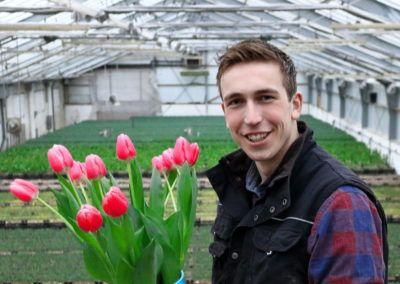 Mr Tulip roze tulpen
