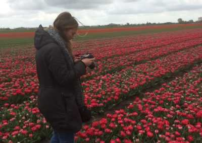Mr Tulip Tours rode tulpen