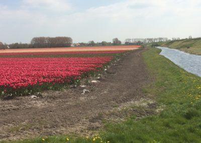 Mr Tulip Tours tulpen naast het water