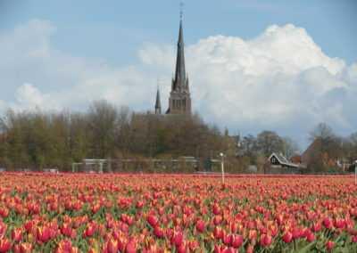 Tulpenveld in het voorjaar met kerk