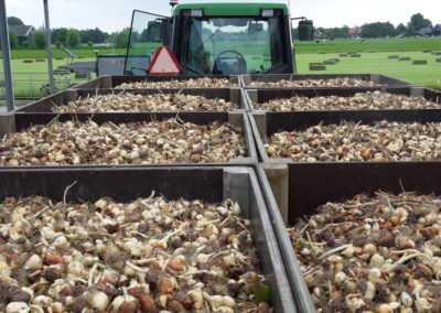 Tulpenbollen bij de tractor